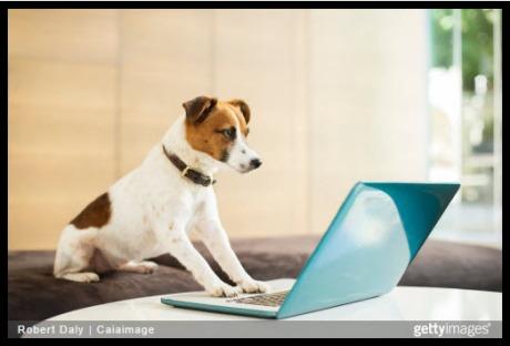 dog_laptop